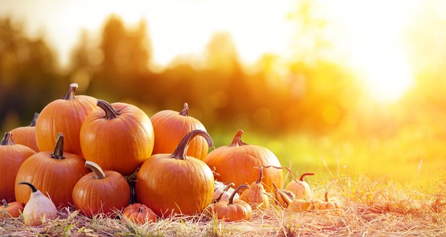cibi d'autunno